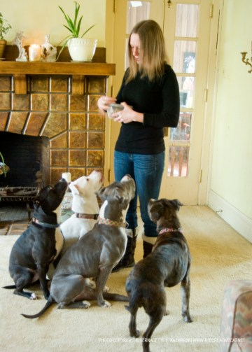 woman with four pit bulls
