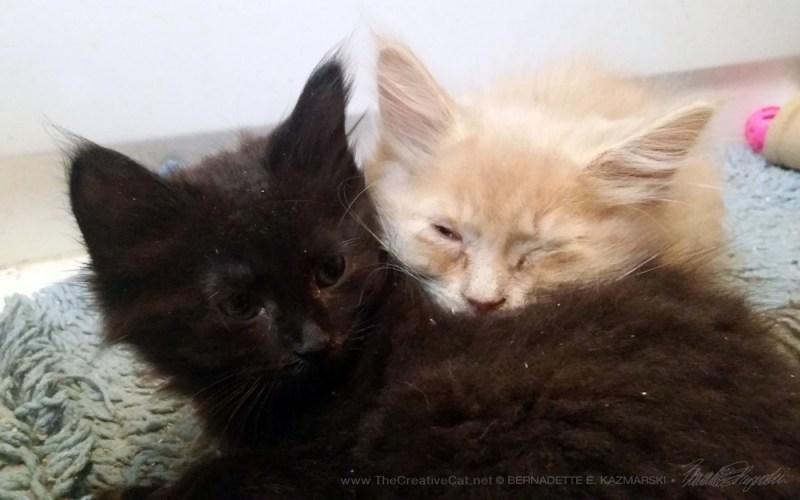 Wake up, bro! We'z adopted!