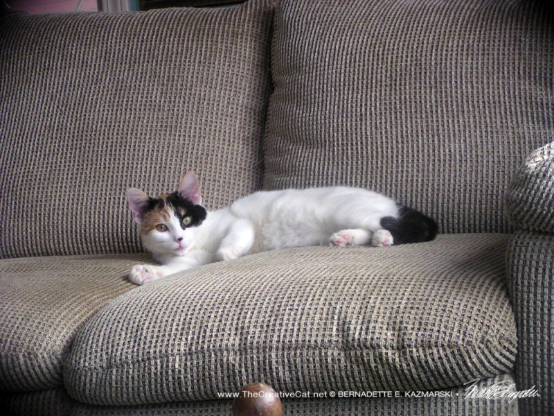 calico on couch