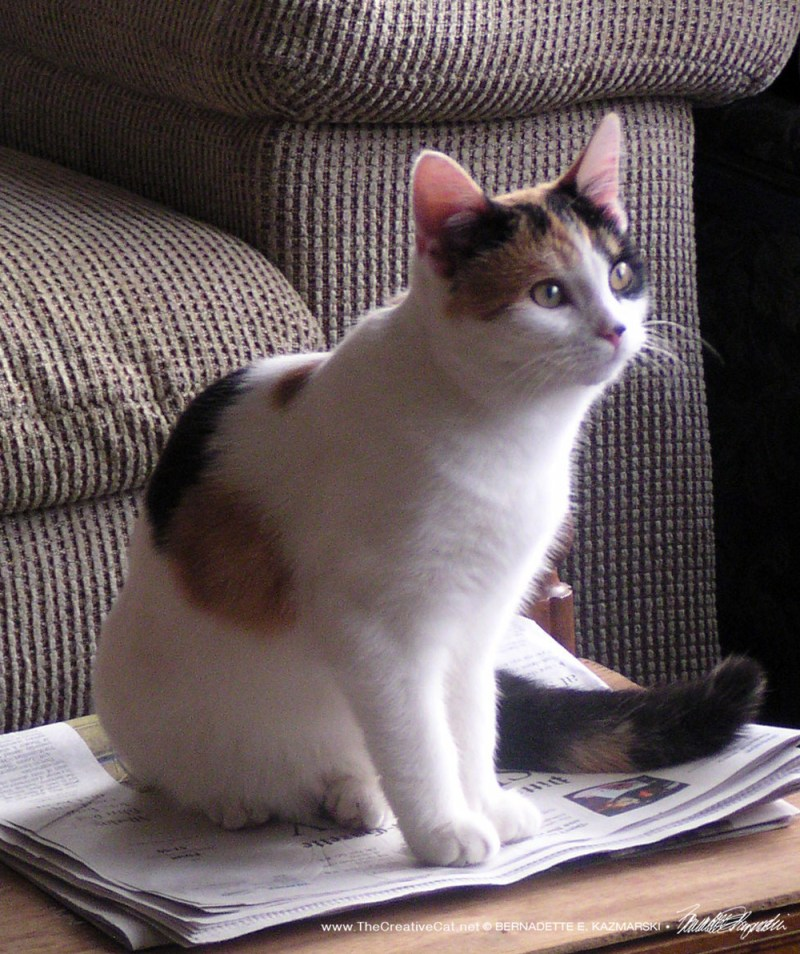 calico on newspaper