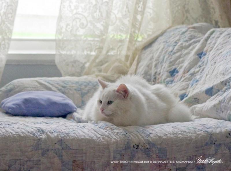 white cat in white background
