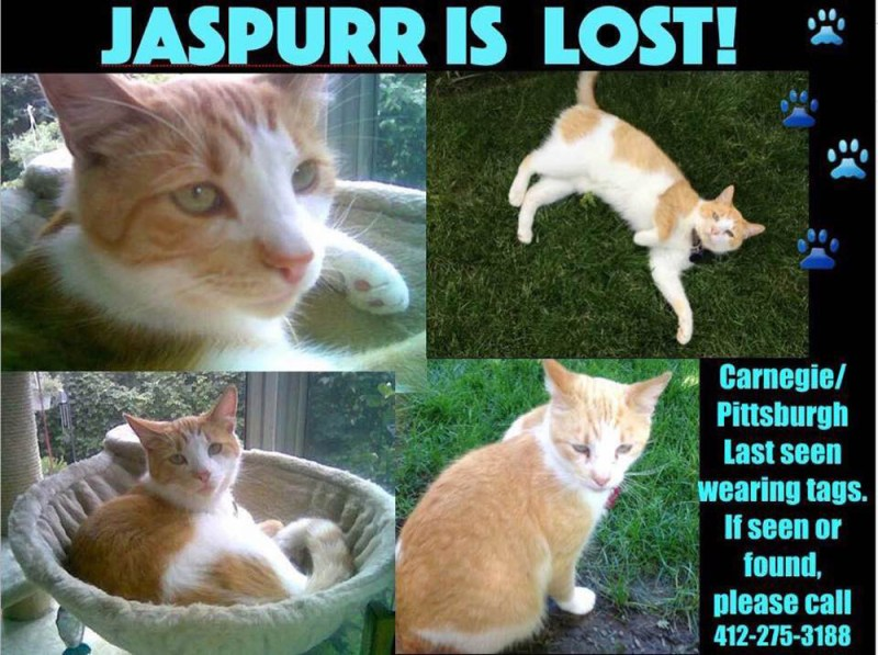 Jaspurr's flyer