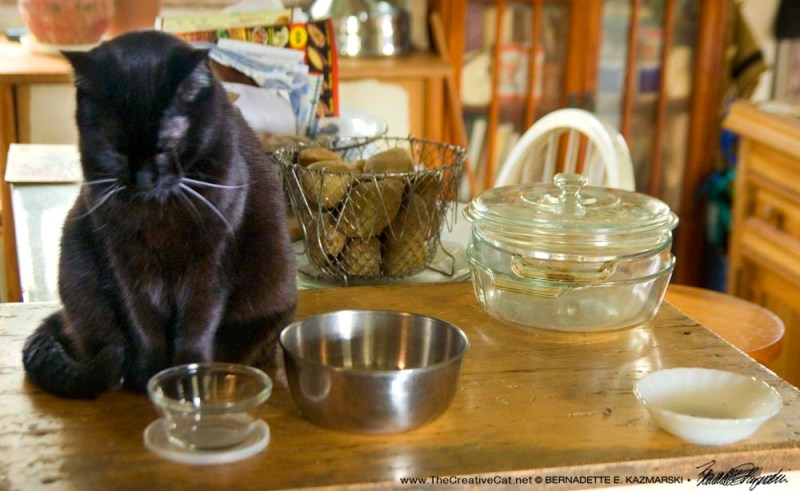black cat with dishes