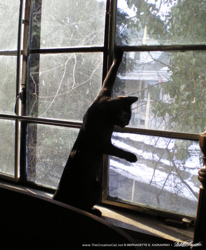 black kitten at window