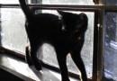 black kitten at window
