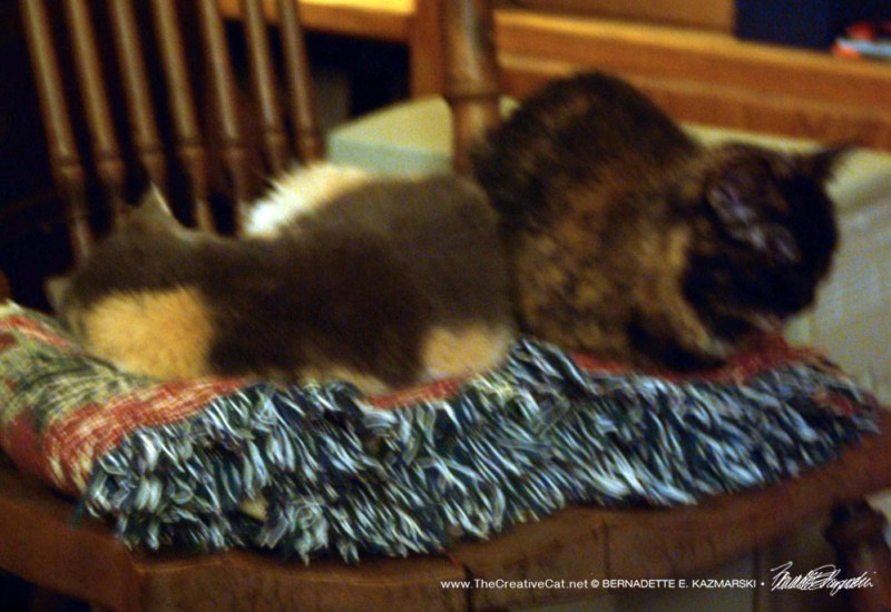 tortoiseshell and dilute calico on rocker