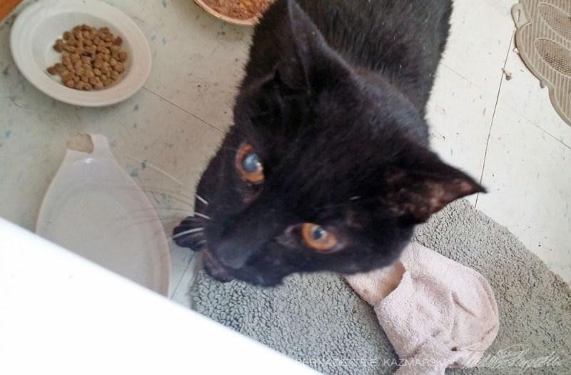 senior black cat with cataracts