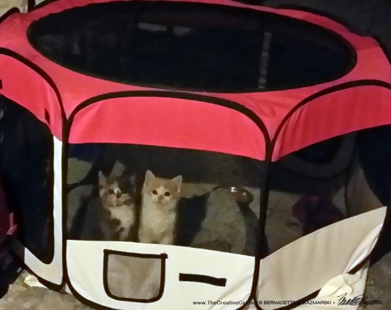Kittens Latte Day 2.