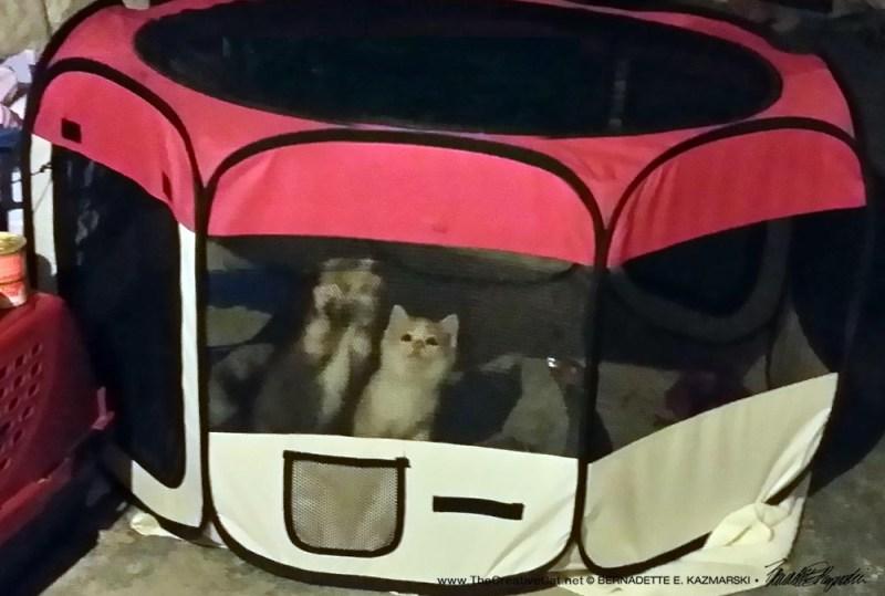Kittens Day 3.