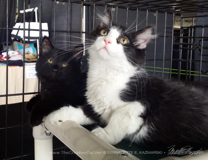 Kittens-WAHS