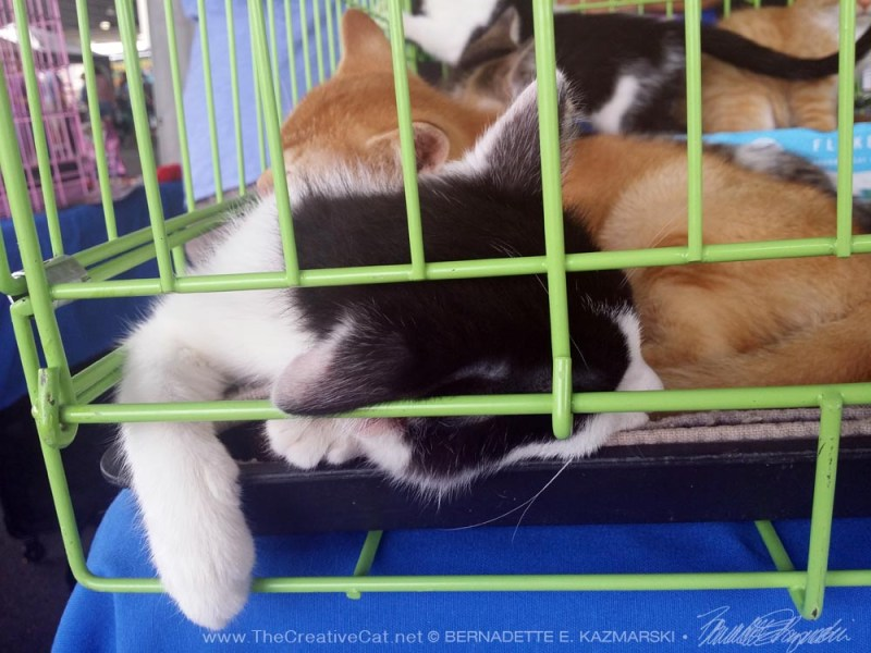 two kittens sleeping in cage