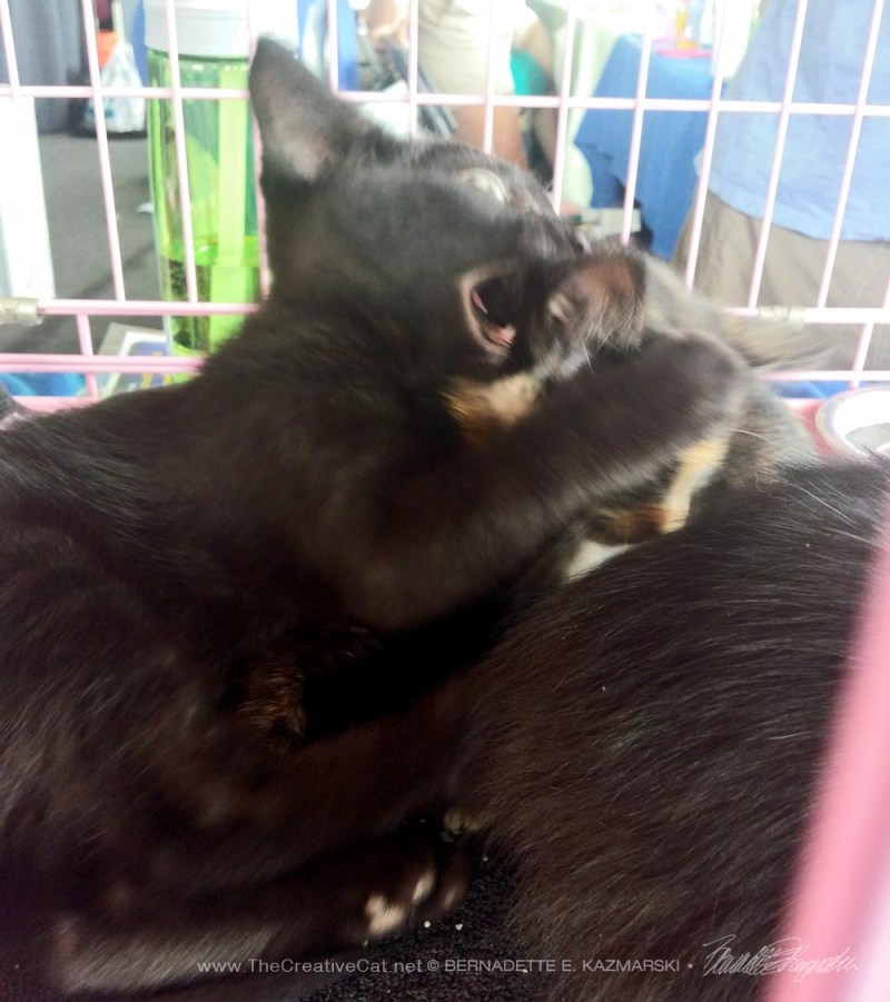 black kitten and tortie kitten
