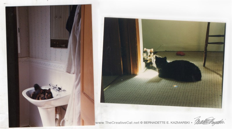 Photos of Cookie and Kublai, and what the landing and bathroom looked like.
