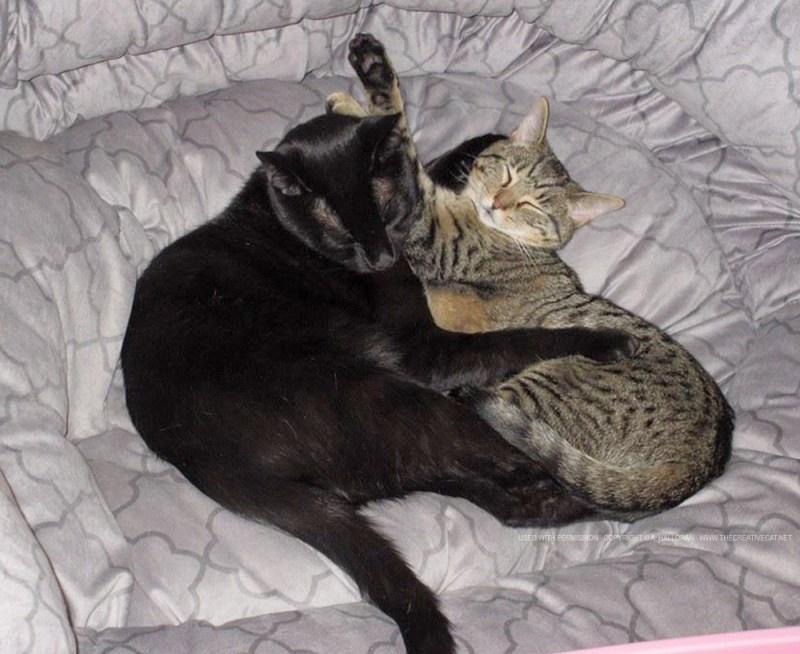 Lizzie and Puck cuddling.