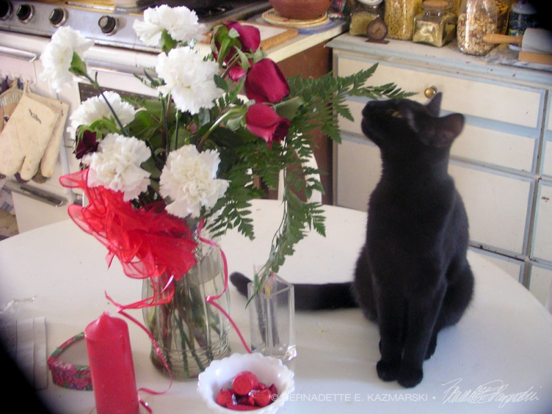 black cat with valentine flowers