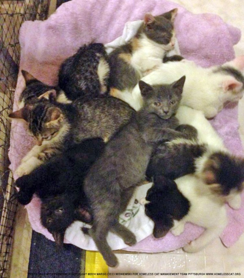 eight kittens