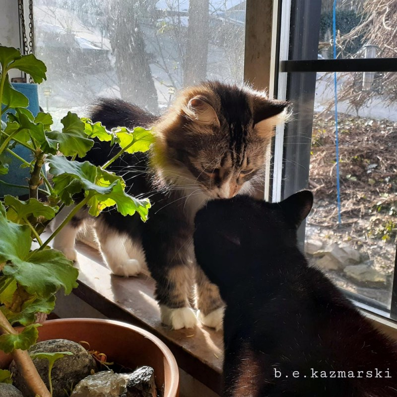 two cats at window
