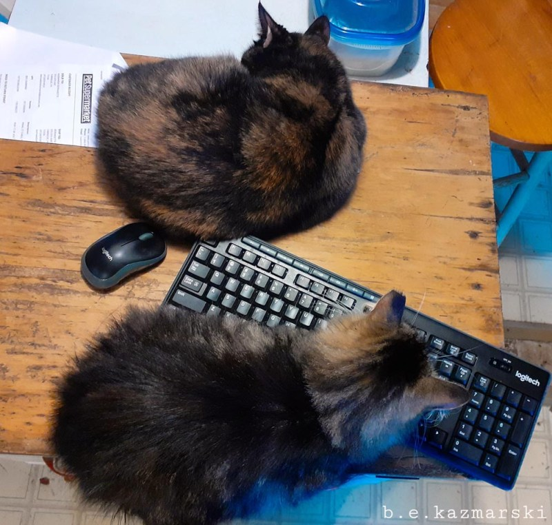 two cats with keyboard