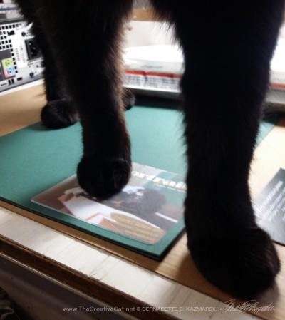black cat paws