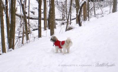little dog in snow
