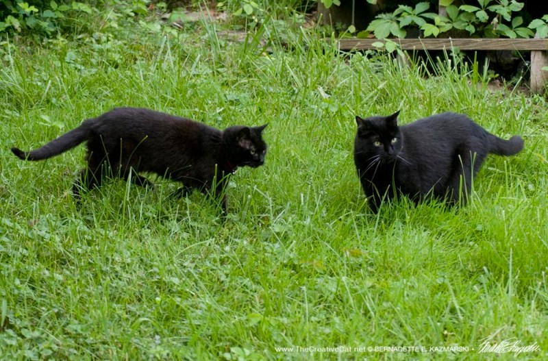 two black cats in yard