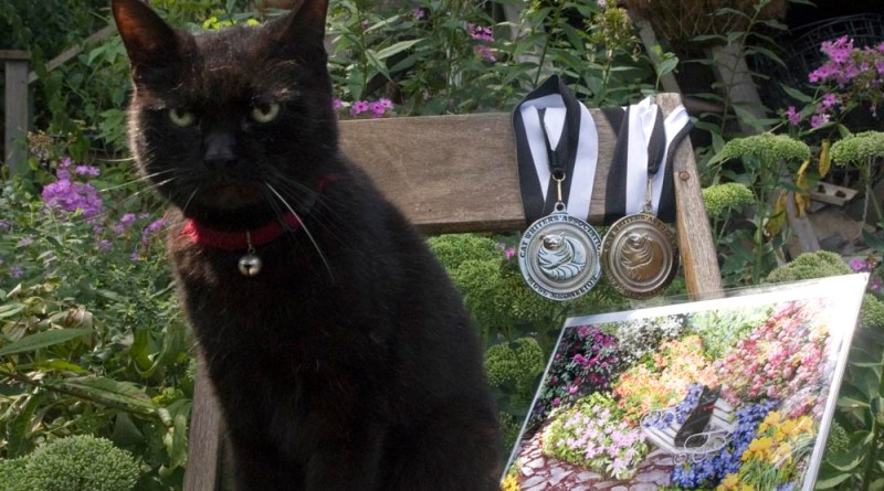 black cat with award