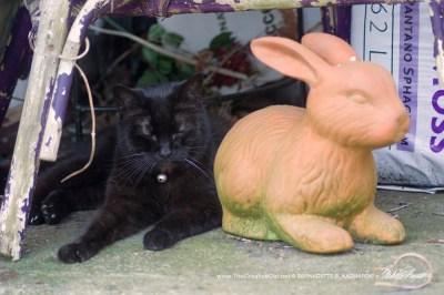 black cat and rabbit statue