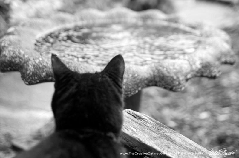 black cat at birdbath