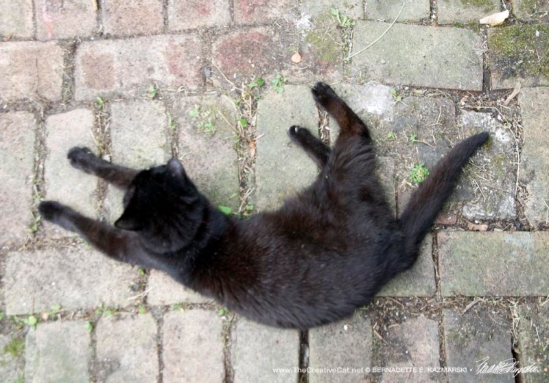 black cat on bricks