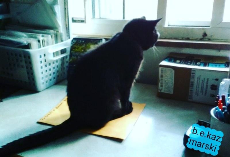 Mimi on the desk.