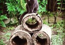 black cat on logs