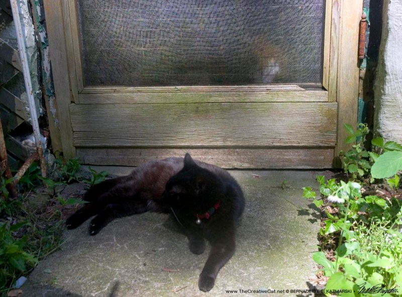 black cat in shade