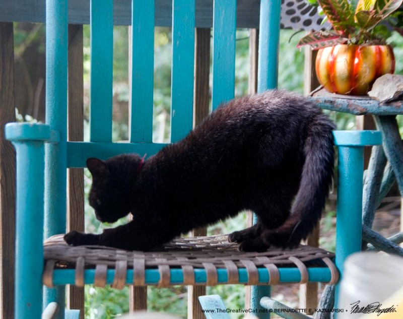 black cat scratching on rocker