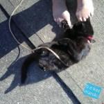 Mimi rolls around on warm concrete and on my feet.