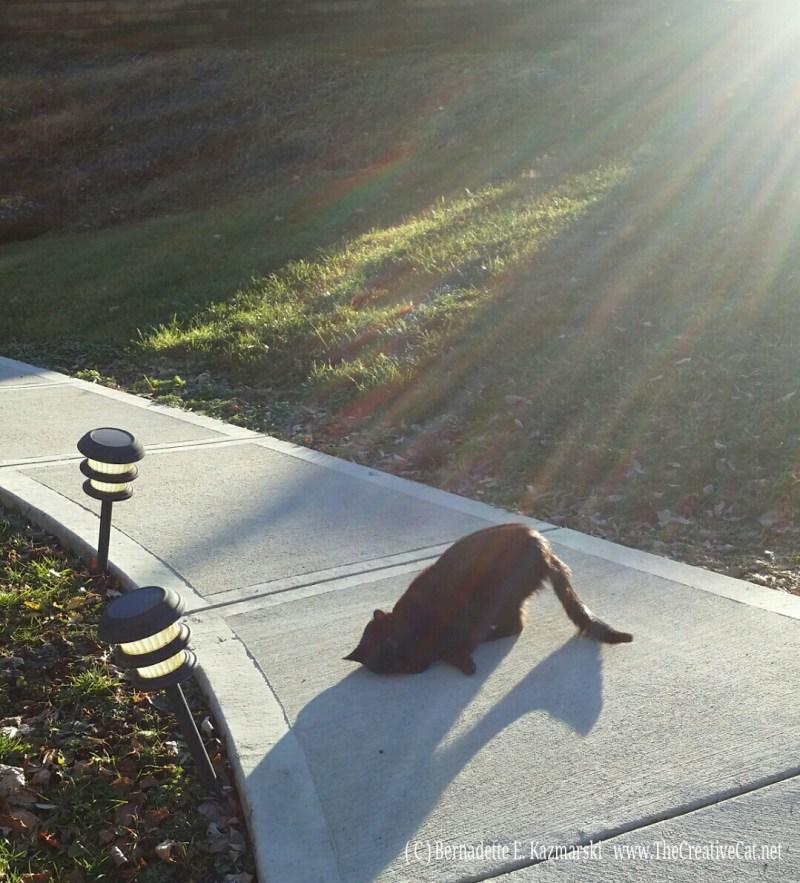 Mimi rolling in the sun.