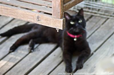 cat on deck