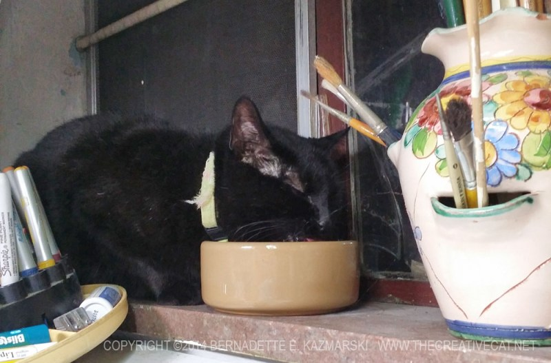 black cat drinking from bowl