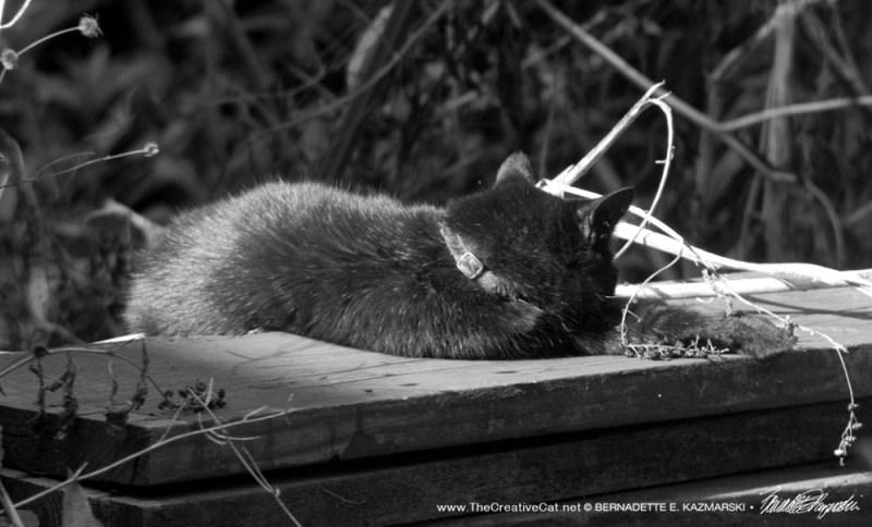 black cat napping on wood pile