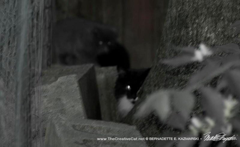 mom-kittens rescue