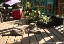 gray cat with plants