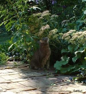 Moses in her garden.