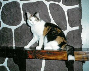 calico cat on mante,