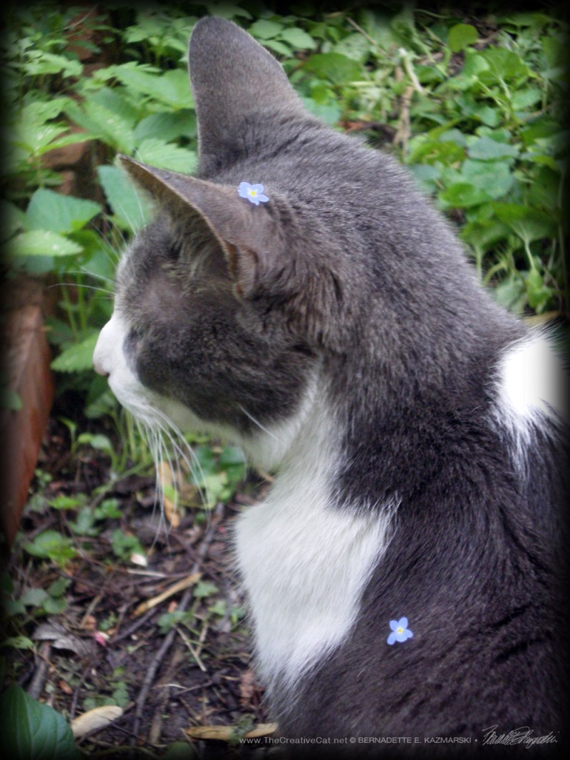 Namir with forget-me-nots.