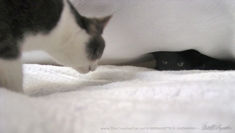 """Namir """"finds"""" Lucy hiding under the covers."""