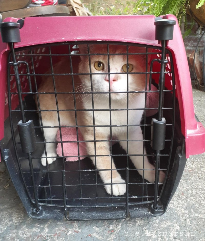 Nugget in the carrier.