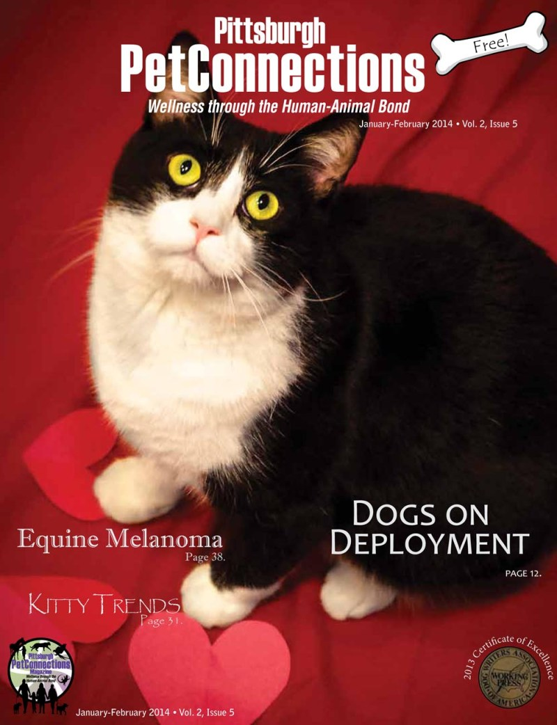pittsburgh petconnections magazine cover