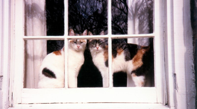 two calico cats in window