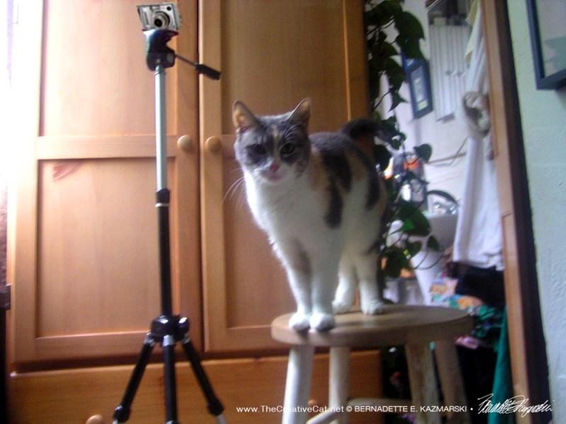 Peaches, Senior Cat Photographer