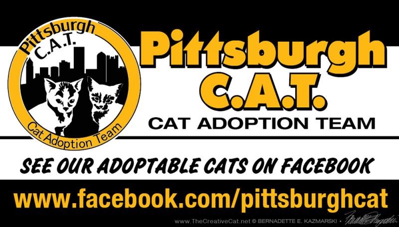 Pittsburgh CAT card front.