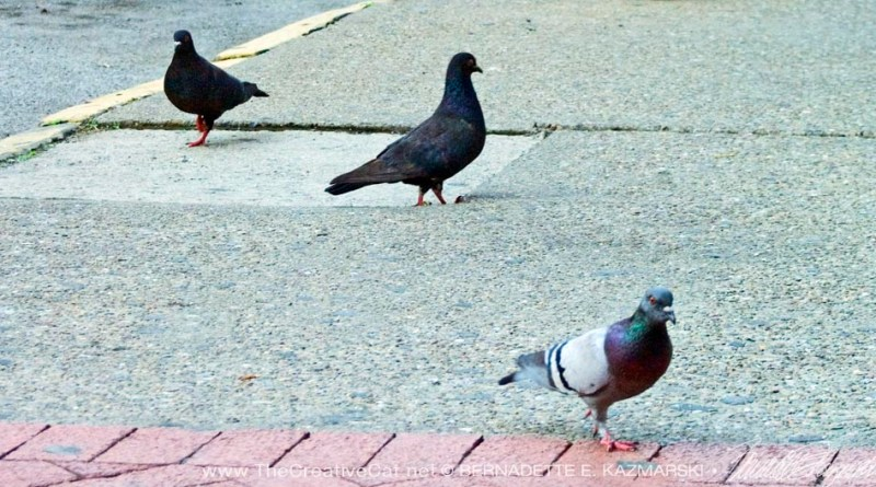 pigeons on the sidewalk